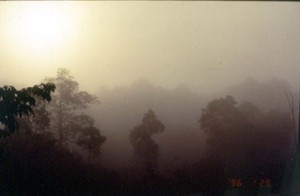 朝もやのかかる森の風景©西原智昭撮影