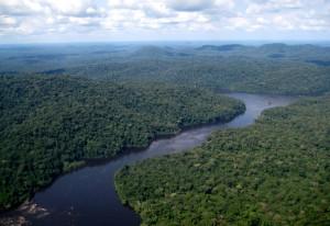 空から見た熱帯林と河川©西原恵美子