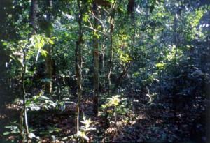 森の中の一風景;先住民はそれぞれの場所のイメージをセットとして記憶する©西原智昭