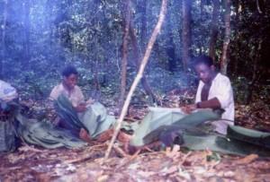 クズウコン科の葉を採集し、簡易家屋の屋根用につくろう先住民©西原智昭