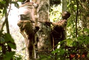 写真58:ハチミツを取るために、木に登り(左)、ハチをいぶし出すために煙をたく(右)先住民c西原智昭