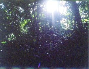 辛うじて日の光を見る森の中©西原智昭