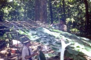 森の中で屋根代わりに使うクズウコン科の葉(上)とそれをつなげて作られた屋根(下) © 西原智昭