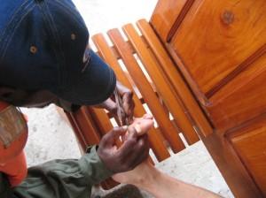 先のとがったピンセットでスナノミを取りだすために切開している様子©西原恵美子
