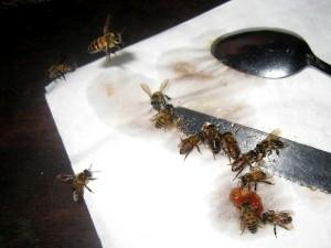 油の付いたナイフにたかるミツバチ©西原恵美子