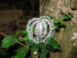 中央部のみが見事に特別に編まれたクモの巣©西原恵美子