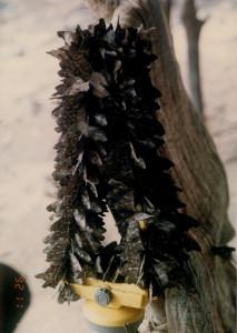 汗のしみついたヘッドランプの帯に群がるチョウ©西原智昭