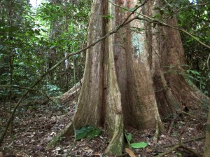 森の中には数えきれないくらいの樹木の種類がある©西原智昭