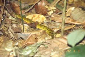 森の中のヘビ©西原智昭
