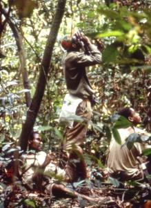 樹上のサルを観察する研修中の若手コンゴ人研究者@西原智昭