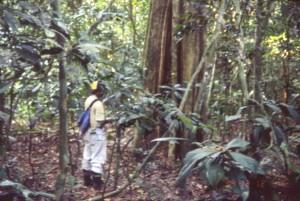 植物の調査に取り組む研修中の若手コンゴ人研修者@西原智昭