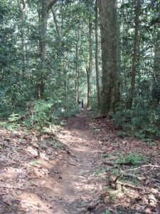 原生林の中に直線で続く大きなゾウ道©西原智昭