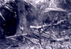 象肉を干すために使った台のあと;当日の大雨のため写真はぼけている©西原智昭