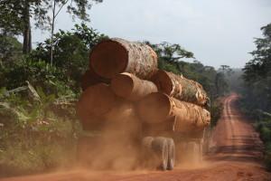 木材を搬出する伐採トラックとその道路©西原智昭