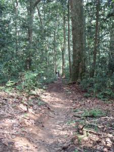 まっすぐと伸びる原生林の中のゾウ道©西原智昭