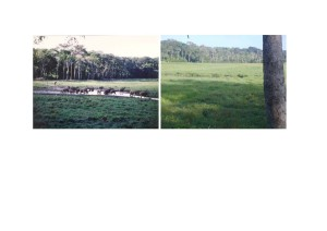マヤ・ノールと呼ばれるバイ(左は約15年前、右は現在);現在は草本類が繁茂しマルミミゾウがあまり訪れていないことを示唆©Florence Magliocca(左);African Parks Network(右)