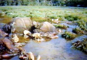 ムアジェ・バイで密猟されたマルミミゾウの死体©WCS Congo