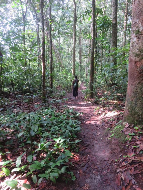 写真236:広々したゾウ道とその脇の見通しのいいベンバの森©西原智昭