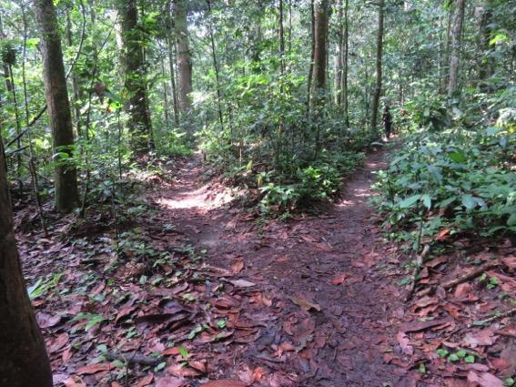 写真237:二股に分かれていくゾウ道。森を知る先住民のガイドなしではこうした場所で迷う©西原智昭