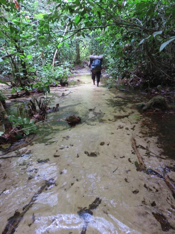写真238:人が住んでいない森の中で川の水は鮮やかに透明。森歩きはこうした水場や沼地を何箇所も渡る©西原智昭