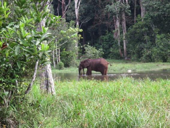 写真244:マバレ・バイでのマルミミゾウ。その右下に密猟されたゾウの頭骨が見える©西原智昭