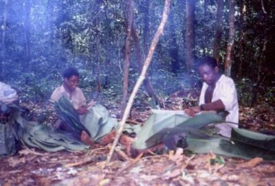 写真278:森での簡易家屋に必要な葉を採集した先住民©西原智昭